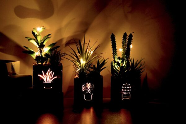 BEGONDIS Set of 3 Artificial Succulents with Led Lights in Wooden Box, Artificial Plants Plastic Fake Topiary for Home/Office Decorations, Table Centerpiece